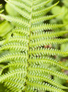 Green Fern Leave Stock Photography