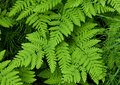 Green fern leaves Stock Photos