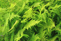 green fern leaves texture Royalty Free Stock Photo