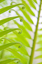 Green fern the origin to in the nature Stock Photos