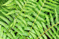 green fern plant texture Royalty Free Stock Photo