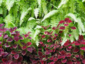 Green fern and red small plant on vertical garden. Royalty Free Stock Photo