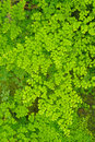 Green ferns patern. Stock Photography