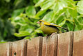 A green fich sat on a garden fence Royalty Free Stock Photo