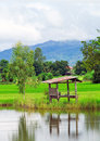 Green field asia paddy field Stock Image