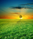 Green field and beautiful sunset Stock Photos