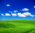 Green field blue sky Stock Photography
