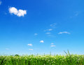 Green field blue sky Stock Photo