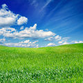 Green field blue sky beautiful nature eco background grass white clouds season spring Stock Photos