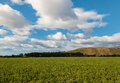 Green field with blue sky and clouds Royalty Free Stock Photo