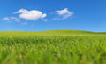 Green field and blue sky day Royalty Free Stock Photo