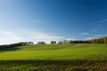 Green field and blue sky at sunset Royalty Free Stock Photo