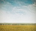 Green field and blue sky vintage nature background Stock Photo