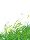 Green field with butterflies, summer background Royalty Free Stock Photography