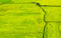 Green field ,feel green Royalty Free Stock Photography