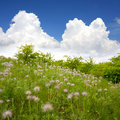 Green field with flowers Royalty Free Stock Photography