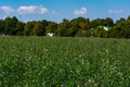 Green field flowers outdoors park expanse landscape Royalty Free Stock Image
