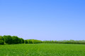 Green Field, Forest and Blue Sky. Summer Landscape Background Royalty Free Stock Photo