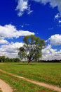 Green field with a lone tree Royalty Free Stock Photo