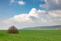 Green field and lonely tree landscape Royalty Free Stock Photo