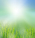 Green field in morning light use for ntural background Royalty Free Stock Image