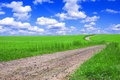 Green field with road and blue sky. Stock Photos