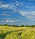Green field with road and blue sky picture of in summer Royalty Free Stock Image