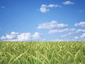 Green field on sky background Royalty Free Stock Photos