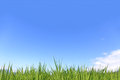 Green field stock image fresh grass with blue sky Royalty Free Stock Photography