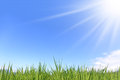 Green field stock image fresh grass with bright blue sky Stock Images