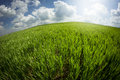 Green field taken with fisheye and beautiful cloudy sky lens Royalty Free Stock Photography
