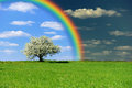 Green field with tree and rainbow