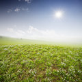 Green field with  white clouds Stock Images