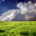 Green field and white clouds Royalty Free Stock Photos