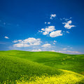 Green field with yellow flowers beautiful view of a in tuscany italy Stock Images