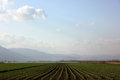 Green fields being irrigated in hula valley israel taken at hula valley galilee panhandle israel Stock Photos