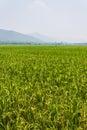 Green fields blue skies summer in thailand Stock Photos