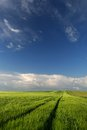 Green fields countryside landscape with path before the sunset time in the spring season Stock Photos
