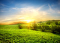 Green fields of grass and trees at sunset Stock Photos