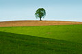 Green fields with human activity Stock Image