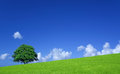 Green fields and lone tree Royalty Free Stock Photo