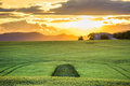 Green fields at sunset in Provence Royalty Free Stock Photo