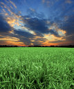 Green fields with sunset sky Royalty Free Stock Photo