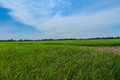 Green fields under blue sky Royalty Free Stock Photo