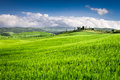 Green fields of wheat in the countryside tuscany italy Stock Photos