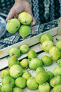Green figs senior seller holding marketplace Royalty Free Stock Images