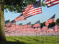 Green Filed with Many American Flags Royalty Free Stock Photo