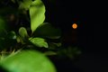 Green in focus is a plant shoot night Royalty Free Stock Image