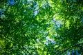 Green foliage Royalty Free Stock Photo