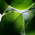 Green foliage Stock Photos